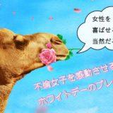 バラをくわえるラクダ